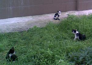 Кошки РГАДА (фото Ю.Смирновой)